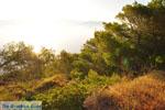 Dennenbomen Agkistri | Griekenland | De Griekse Gids foto 4 - Foto van De Griekse Gids