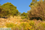 Dennenbomen Agkistri   Griekenland   De Griekse Gids foto 7 - Foto van De Griekse Gids