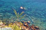 In de bloei   Agkistri Griekenland   De Griekse Gids - Foto van De Griekse Gids