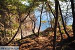 Klein zandstrand tussen de dennebomen bij Skala   Agkistri Griekenland   Foto 1 - Foto van De Griekse Gids