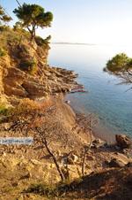 Klein zandstrand tussen de dennebomen bij Skala   Agkistri Griekenland   Foto 4 - Foto van De Griekse Gids