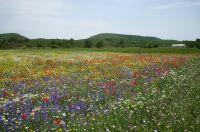 Zakynthos bloemen - Foto van Willem Punt