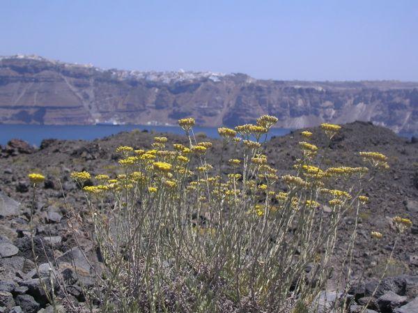 zicht vanaf de Vulkaan op Santorini - Foto van hannie